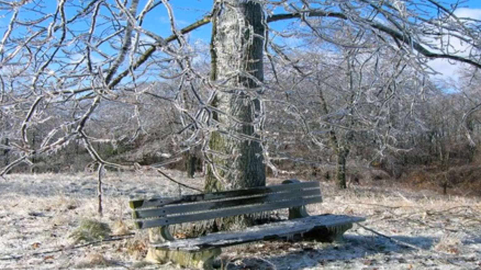 A tree and a park bench encased in ice on a clear winter's day