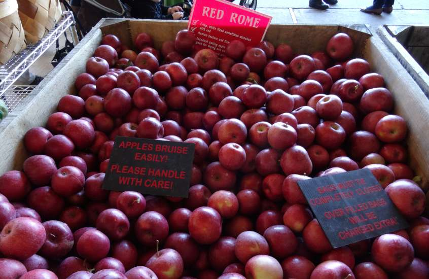 A big bin of apples including Rome, cameo, pink lady and red delicious