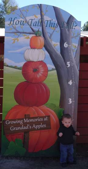 Nolan stands tall at the measuring stick at the apple orchard.