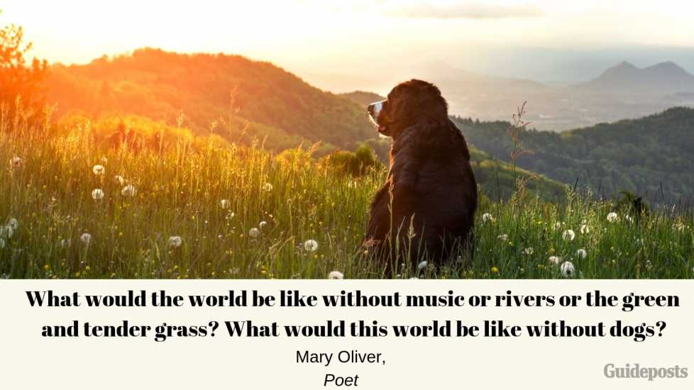 Sentimental Dog Quote: What would the world be like without music or rivers or the green and tender grass? What would this world be like without dogs? ―Mary Oliver, Poet dog lover