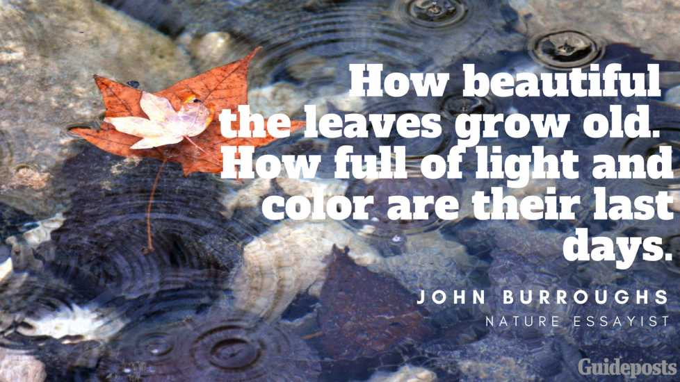 How beautiful the leaves grow old. How full of light and color are their last days. —John Burroughs