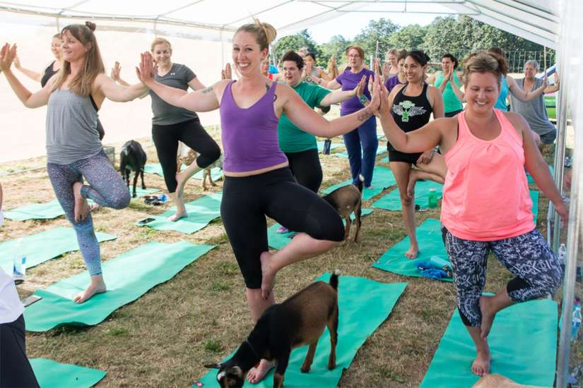 Goat Yoga: It's hard not to smile when a goat lingers on your mat. Better Living Health Wellness