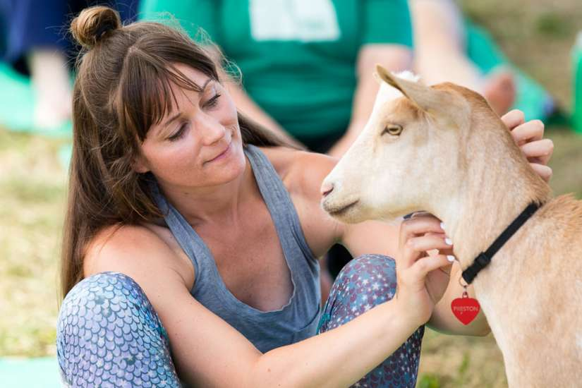 Goat Yoga: The goats sometimes choose to approach certain participants, which makes visitors feel special. Better Living Health Wellness