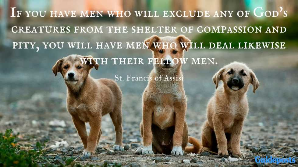 If you have men who will exclude any of God's creatures from the shelter of compassion and pity, you will have men who will deal likewise with their fellow men.