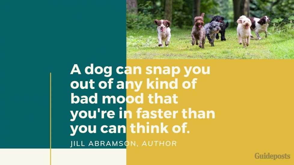 Sentimental Dog Quote: A dog can snap you out of any kind of bad mood that you're in faster than you can think of. —Jill Abramson, Author dog lover