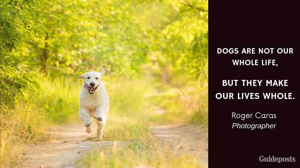 Sentimental Dog Quote: Dogs are not our whole life, but they make our lives whole. —Roger Caras, Photographer dog lover