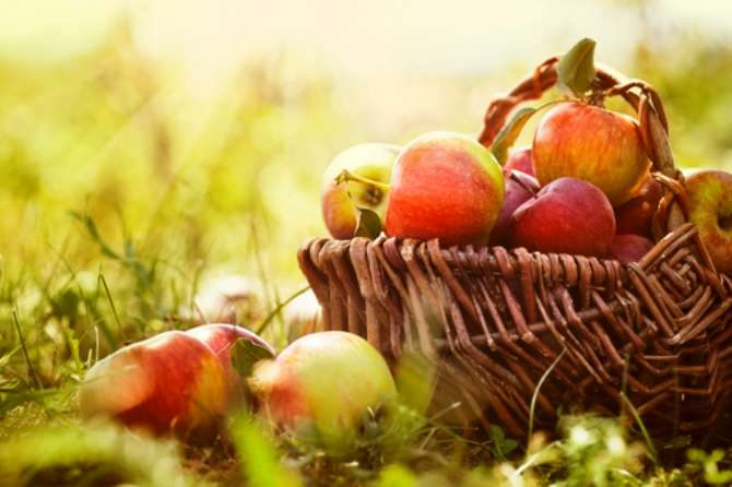 I listen to the crunch of an apple and hear the music of autumn.  O, taste and see.