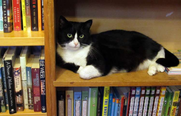Bookstore Cat Boswell lives in Shelburne Falls, Massachusetts, and inspired the name of the store his owners operate, Boswell's Books.