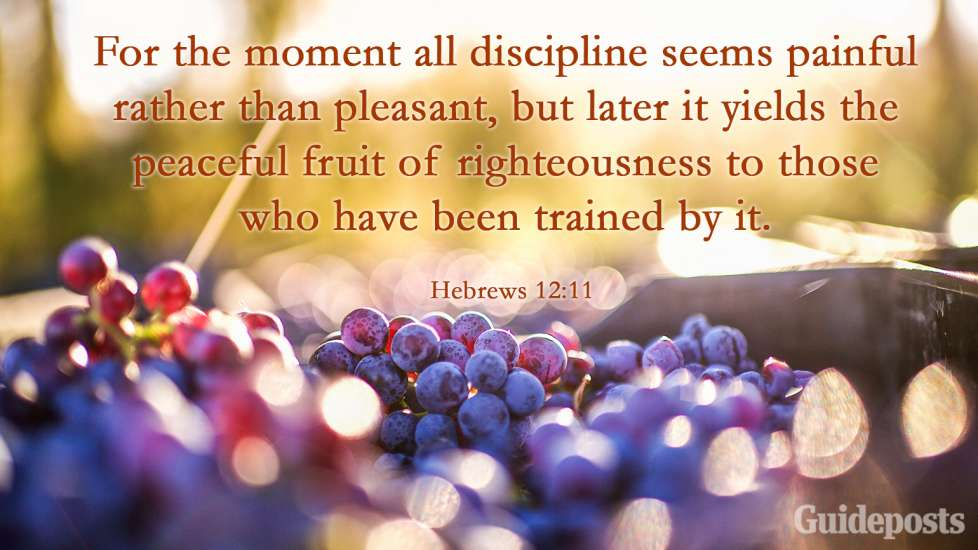 For the moment all discipline seems painful rather than pleasant, but later it yields the peaceful fruit of righteousness to those who have been trained by it.
