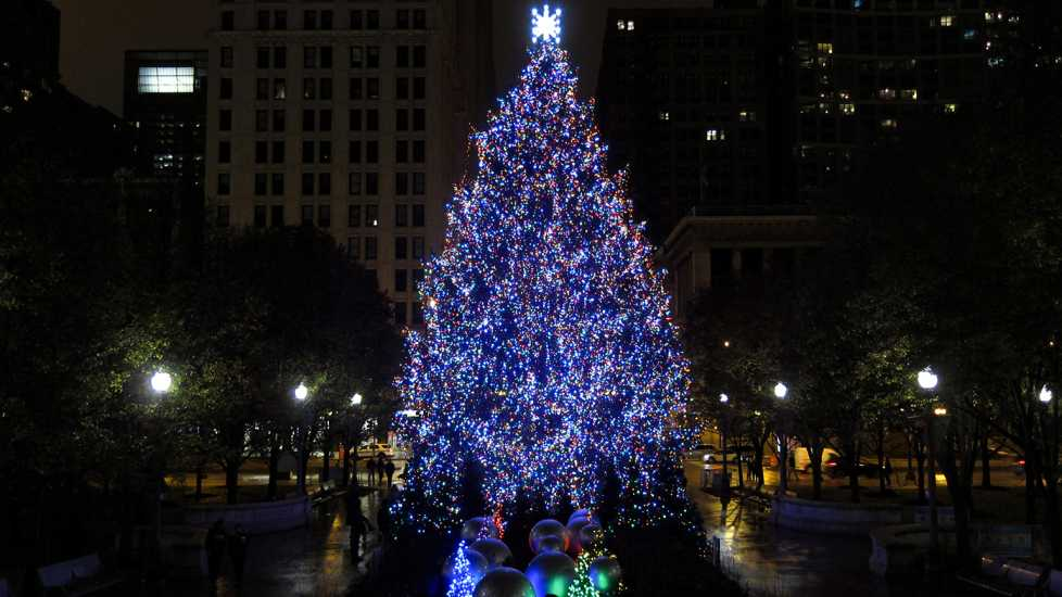 The Windy City's had an official city tree since 1913. For more than a half-century, it was installed in Grant Park, then it spent nearly five decades in Daley (formerly Civic Center) Plaza, but since 2015, the tree has called Millennium Park home.