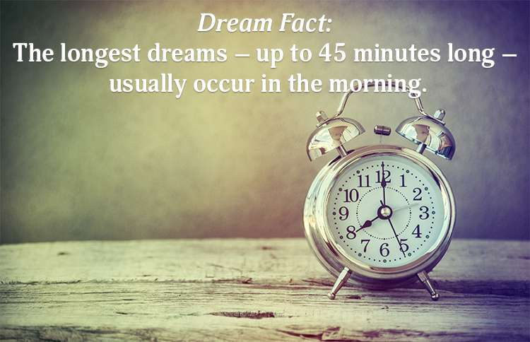 REM Sleep Dream Fact