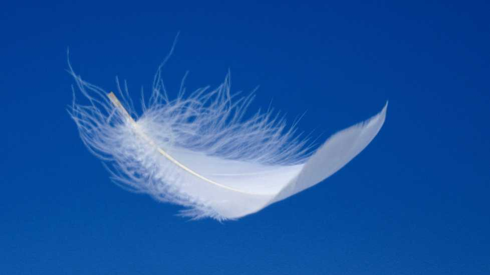 A white feather; Getty Images