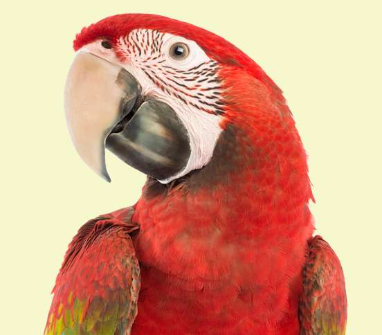 Guideposts: Red parrot