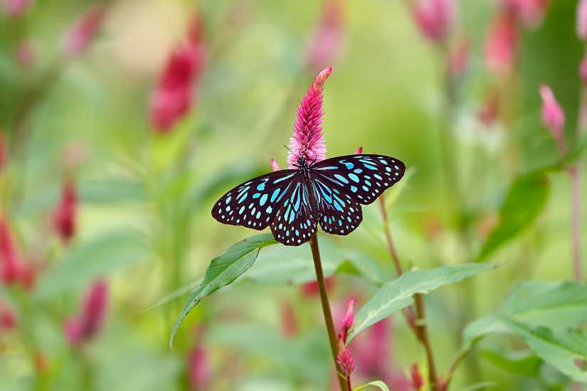A blue butterfly perched on a plant.