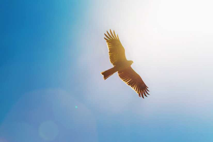 A bird in flight.