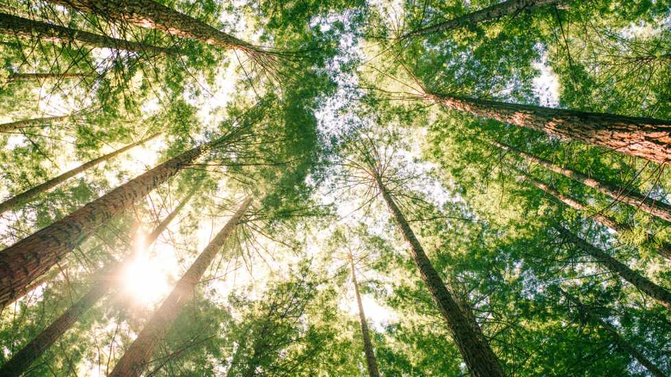 The Vastness of Creation: A tree canopy. Mysterious Ways Editors Share what makes them feel awe inspiration miracles gods grace