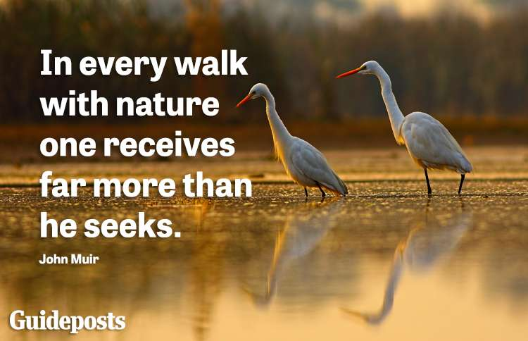 In every walk with nature one recieves far more than he seeks. -John Muir