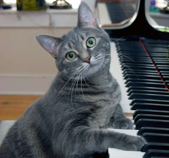 Nora the Piano Cat plays the piano