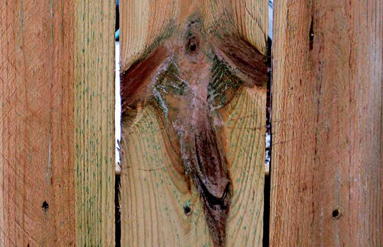 The angel Kristy spotted in a plank in her backyard fence