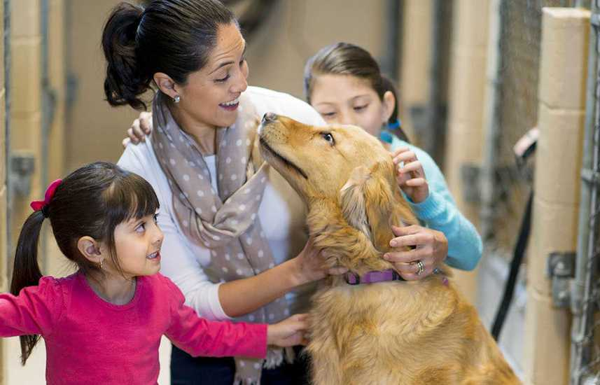 Family petting a rescue dog