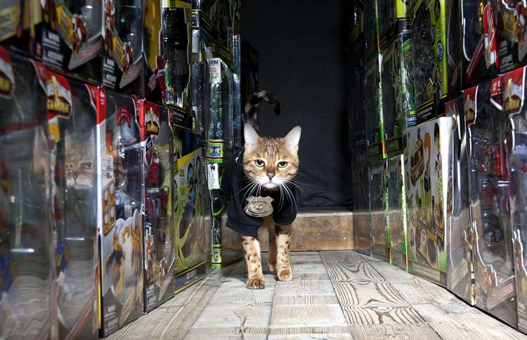 Japanese toy company Bandai hired a dainty Bengal cat named Millie to guard its most precious toys at its Southampton warehouse in England in 2012.