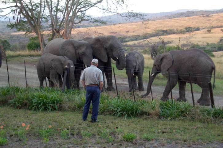 Guideposts: Lawrence gazes at his beloved elephants on the game reserve