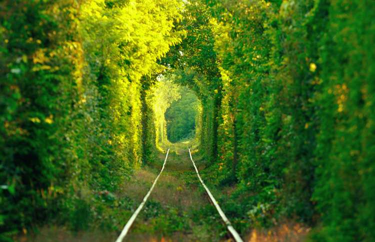 Guideposts: The trees surrounding a Ukrainian train track naturally formed this awe-inspiring lane.
