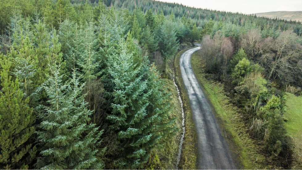 Aerial view of pine forest, The Glen of Aherlow, Tipperary, Ireland