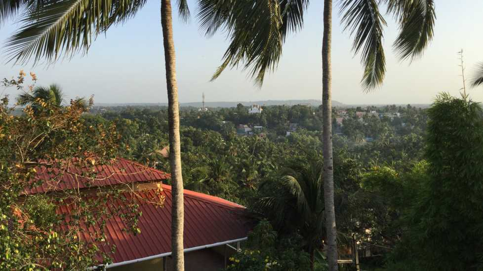 A rooftop photo of the Trivandum, India as palm trees tower above.