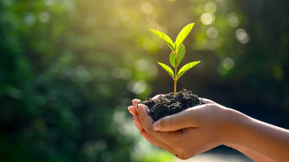 A hand holding a seedling; Getty Images