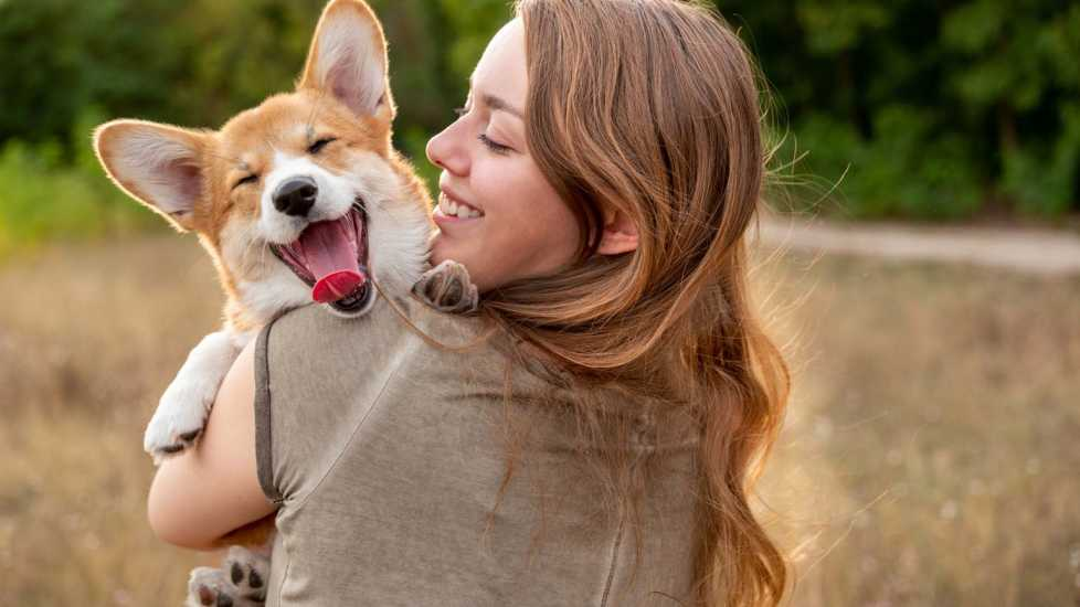 A corgi with its owner; Getty Images