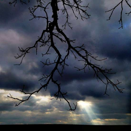 Guideposts: Like black lightning, branches from that tree frame a beam of sunlight breaking through an ominous sky