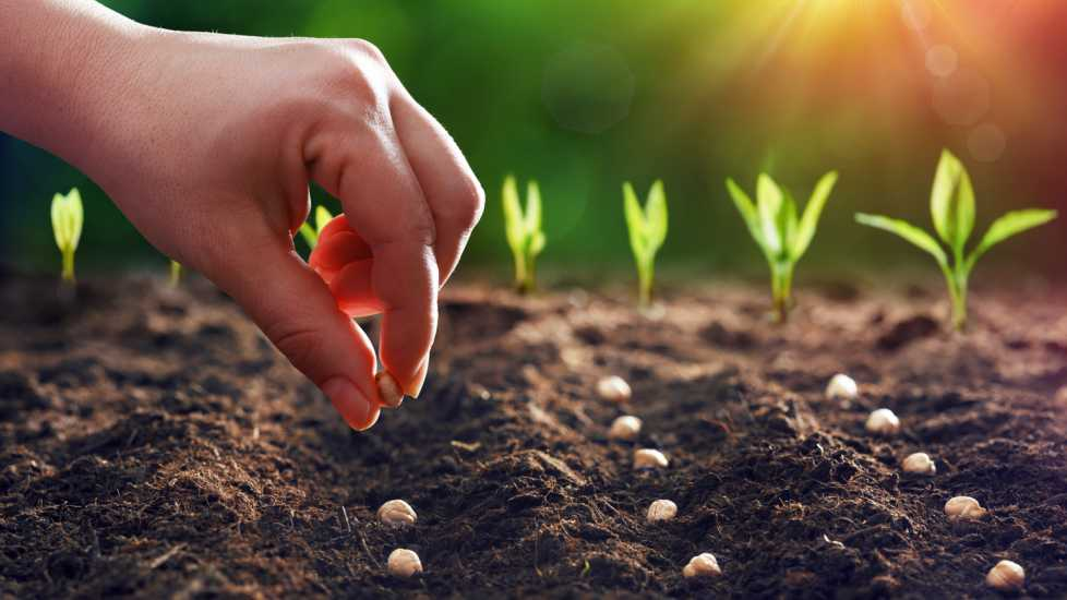 Planting seeds; Getty Images