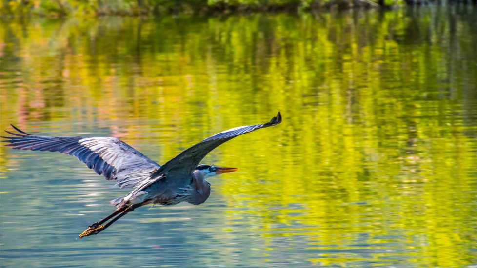 A bird in flight; Getty Images