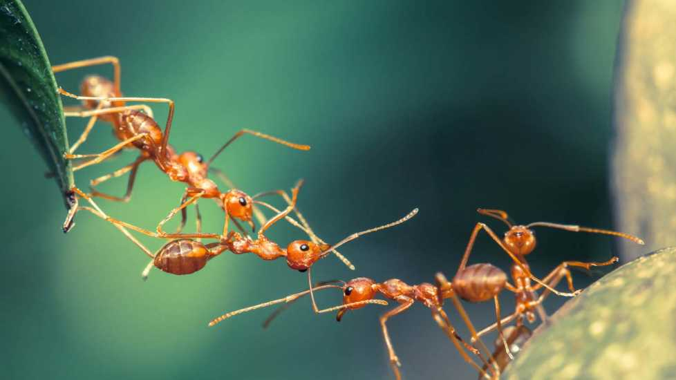 Ants working together; Getty Images