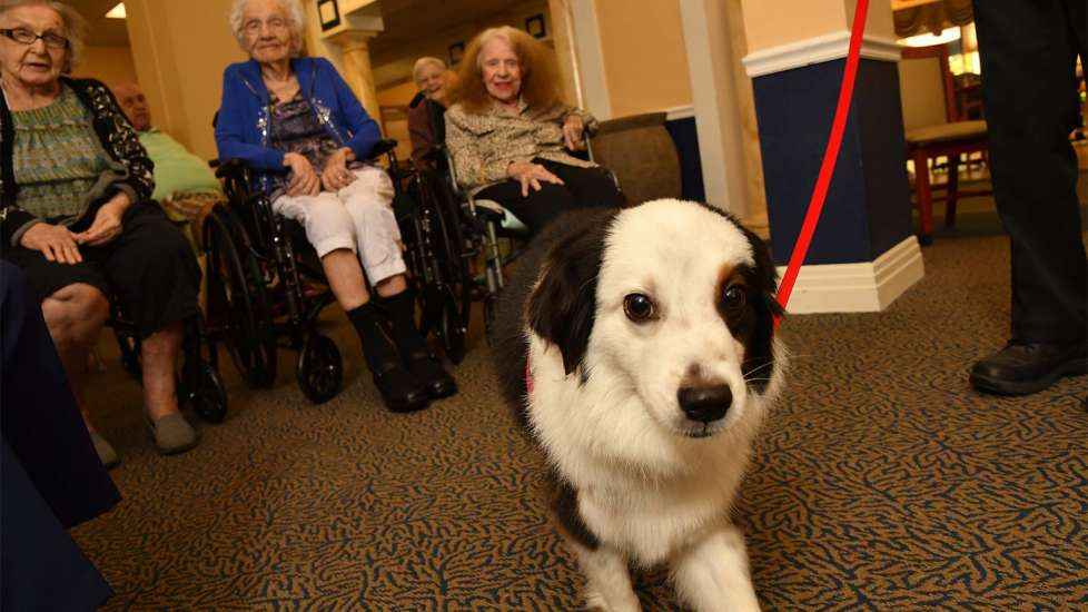 Jack is very much the center of attention whenever he visits the seniors at Gulf Coast Village.