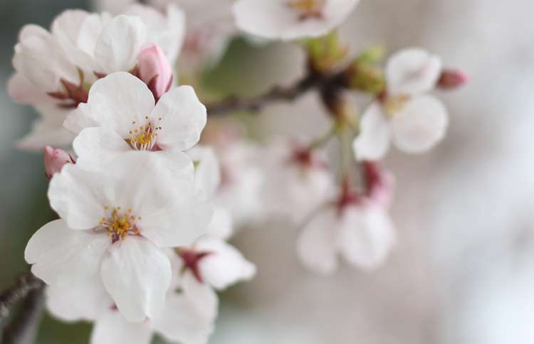 Guideposts: Flowers on the trees grown from seeds sent into space bloomed years early with five petals instead of 30 like their parent trees.