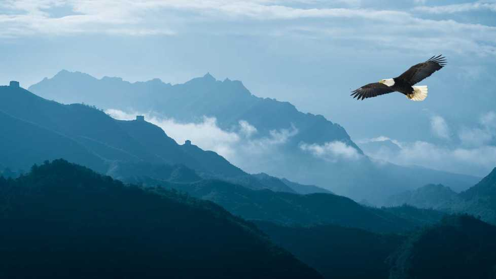 A bald eagle flying over mountains; Getty Images