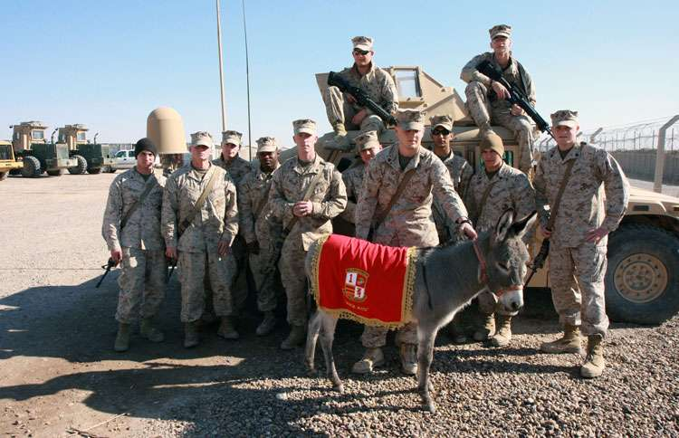 Smoke and the Base Operations Section Marines at Camp al Taqaddum in  Iraq