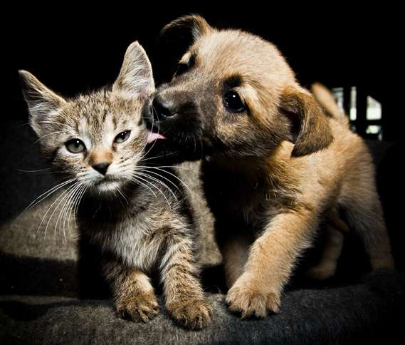 Guideposts: A puppy surprises a kitten with an affectionate slurp