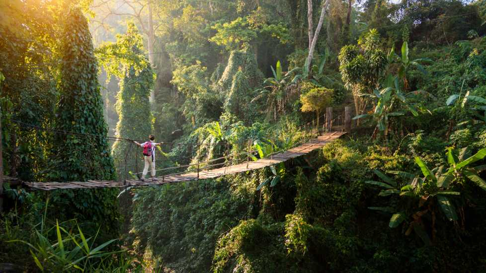 A man walking across a dangerous draw bridge in the rainforest.