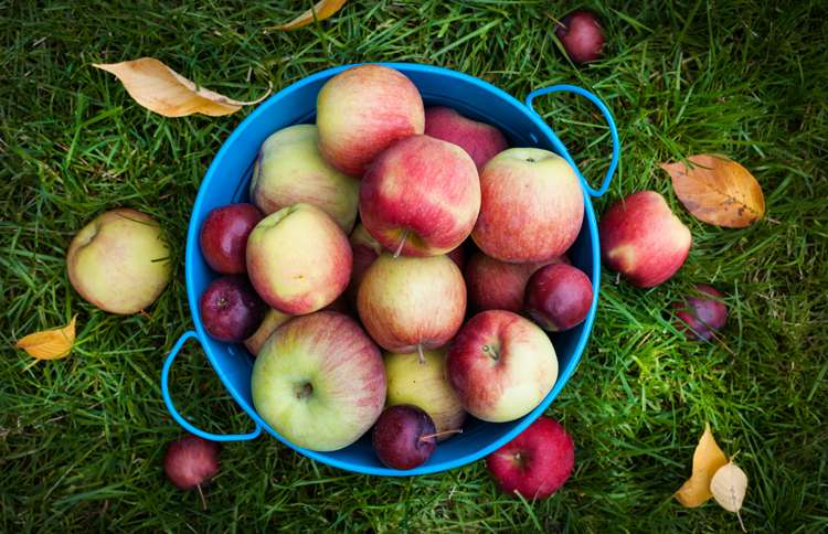 Guideposts: A bushel basket filled with autumn's apples
