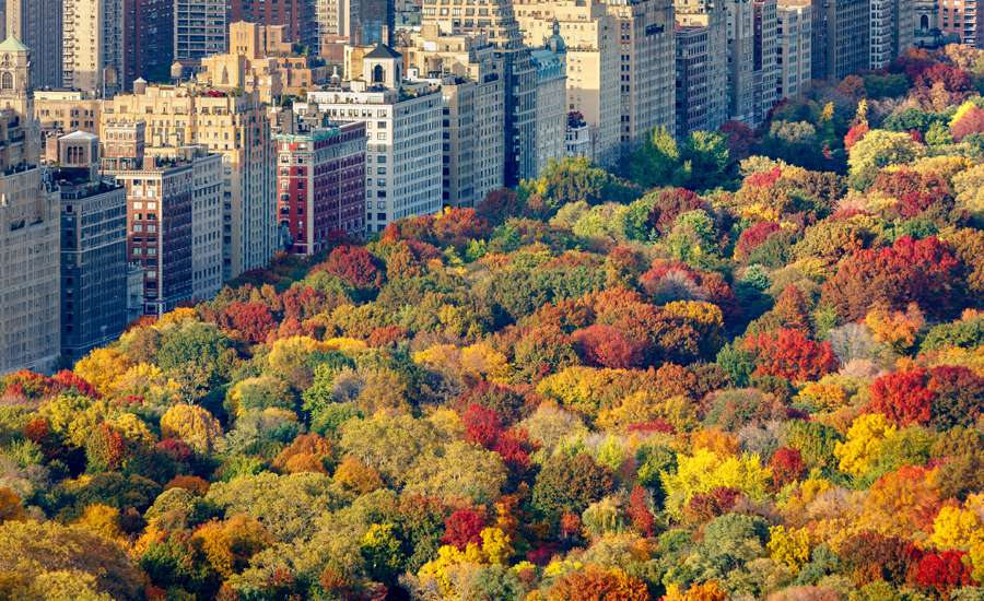 Guideposts: NYC apartments abut Central Park, with trees aflame with fall foliage