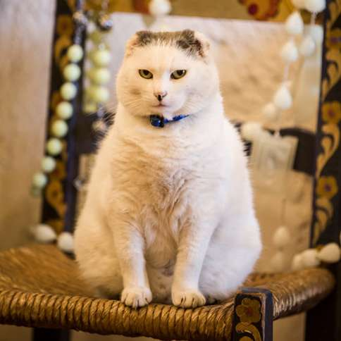 Guideposts: Sula the cat