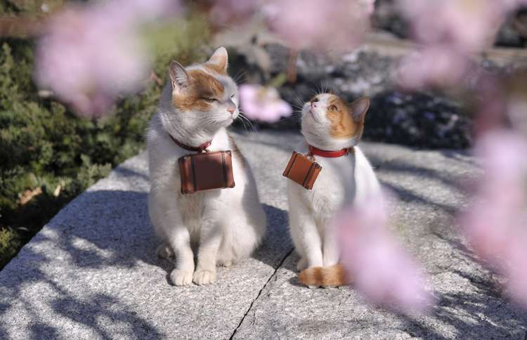 Seasoned traveler Nyalan and his younger apprentice, Deshi, travel carrying tiny suitcases around their neck, working for Japanese travel company Jalan.