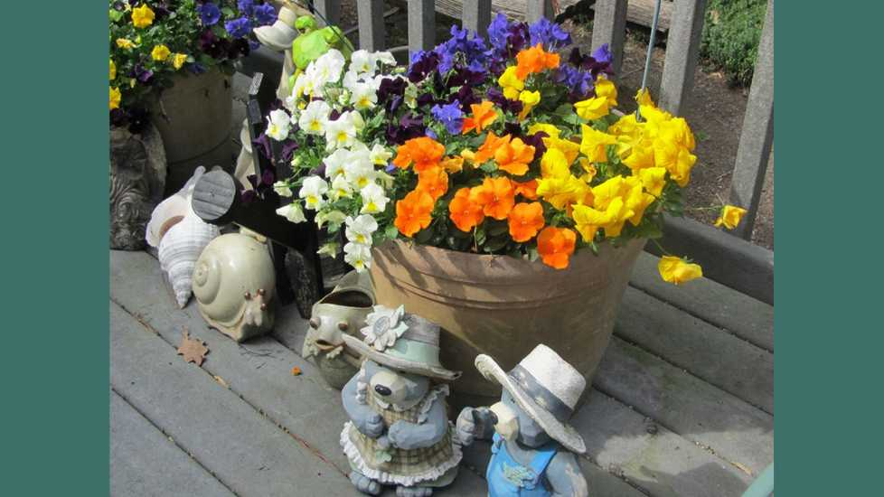 Some pansies on a deck.