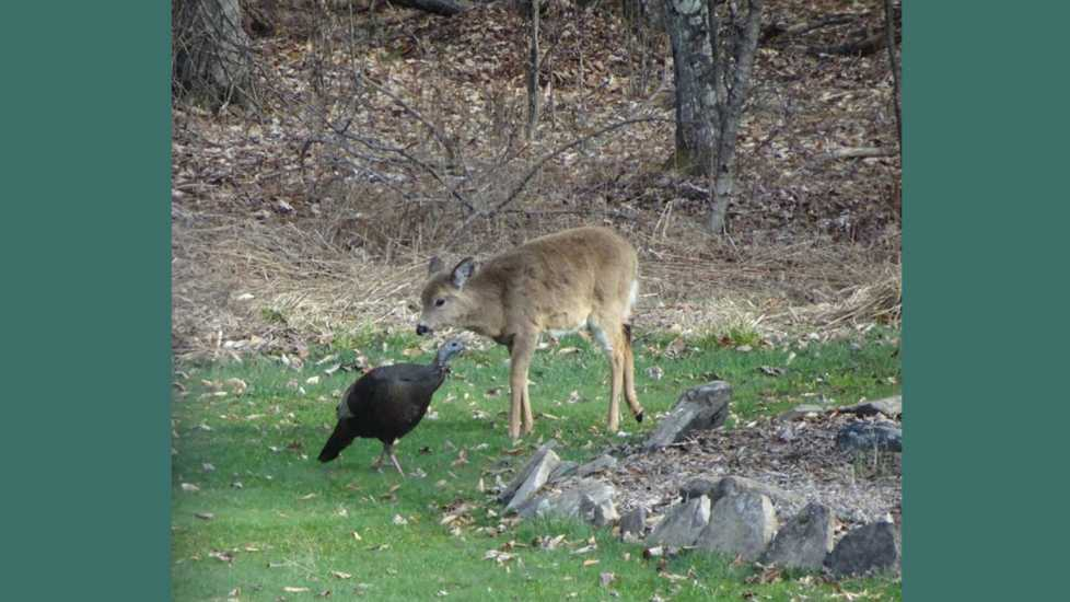 Forest friends meet in our backyard.