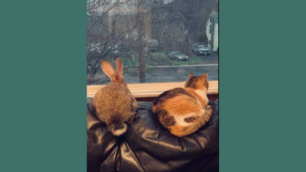Baby rabbit, Uzi hopped up to the window alongside the cat, Callie.