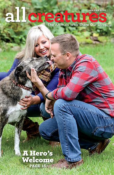 In her cover story for the January-February 2020 issue of All Creatures magazine, Anna Maria Chiasson shares how she helped her husband bring a beloved dog back from Afghanistan.