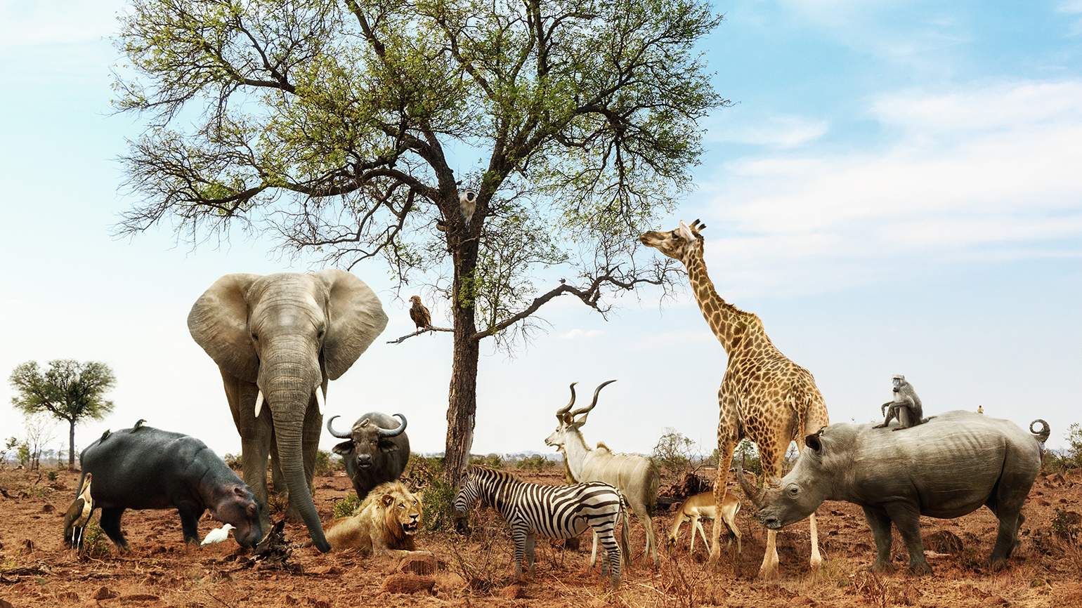 A group of assorted African animals